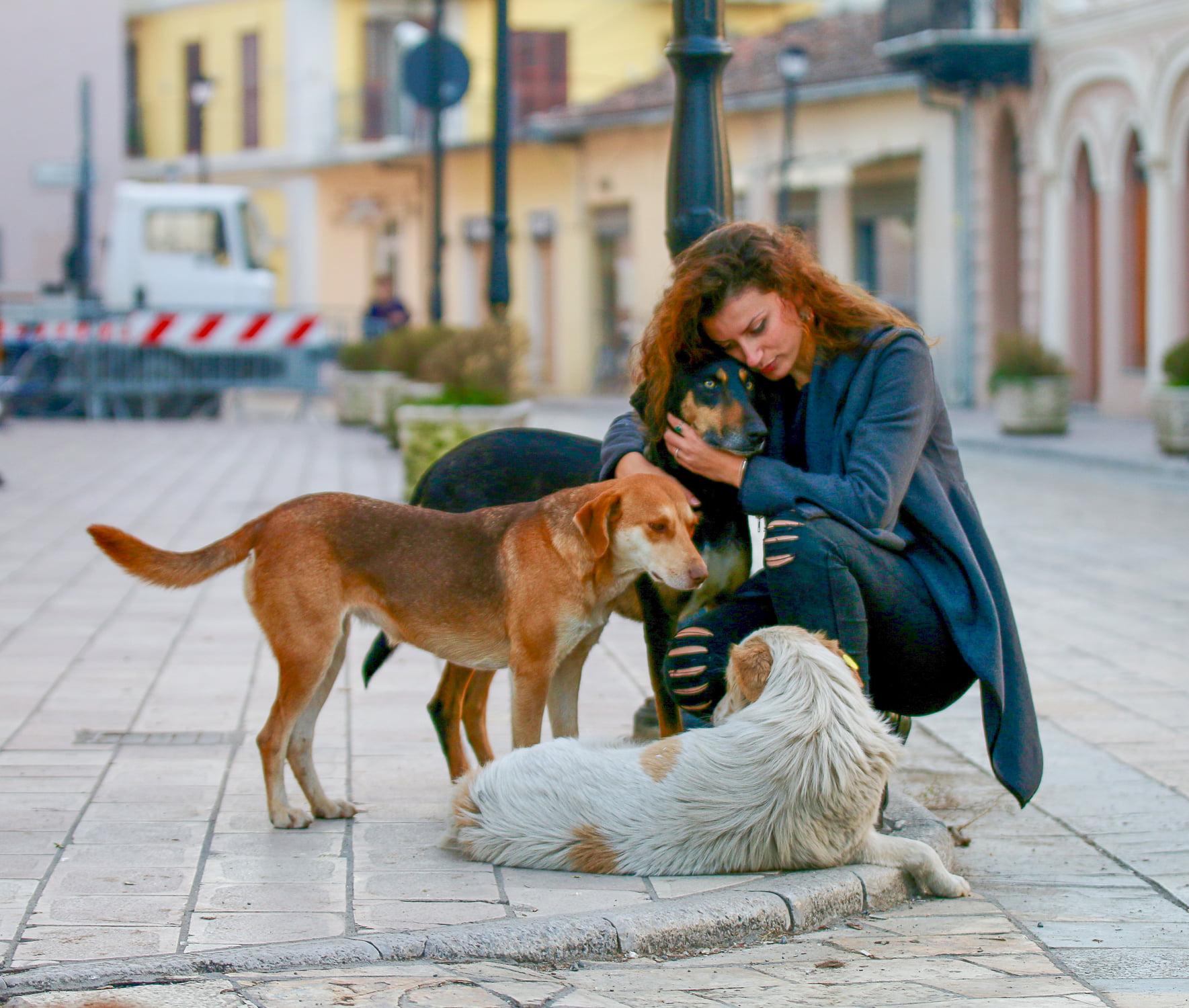 """Oli Pero apel shoqërisë: Mjerim në botën e """"zotnive"""", t'i duash kafshët është një gjë, por t'i njohësh është një tjetër gjë."""